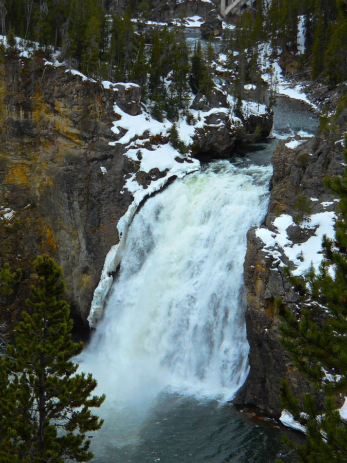 Yellowstone Upper Falls in Spring by Michele Myers