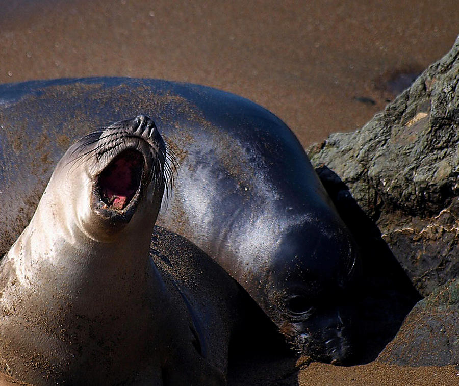 Seal Photograph - Yelp by Camille Lopez