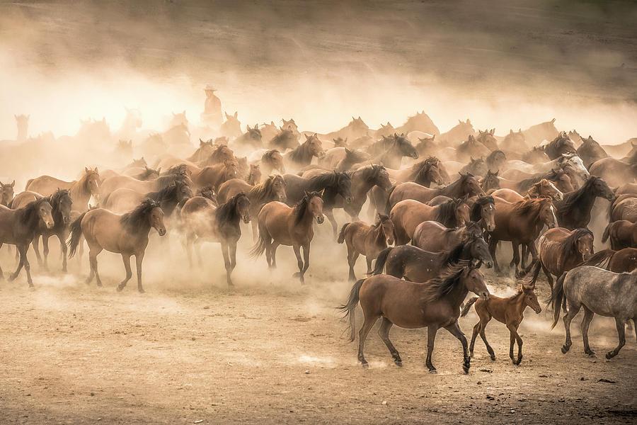 Wild Photograph - Yilki by Tunc Tuncel