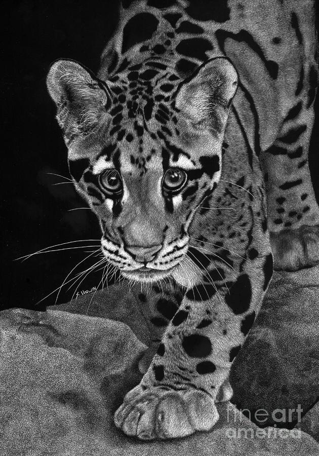 Scratch Board Drawing - Yim - The Clouded Leopard by Sheryl Unwin