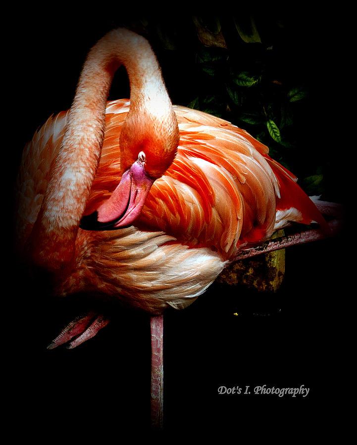 Flamingo Photograph - Yoga Flamingo by Dorothy Hilde