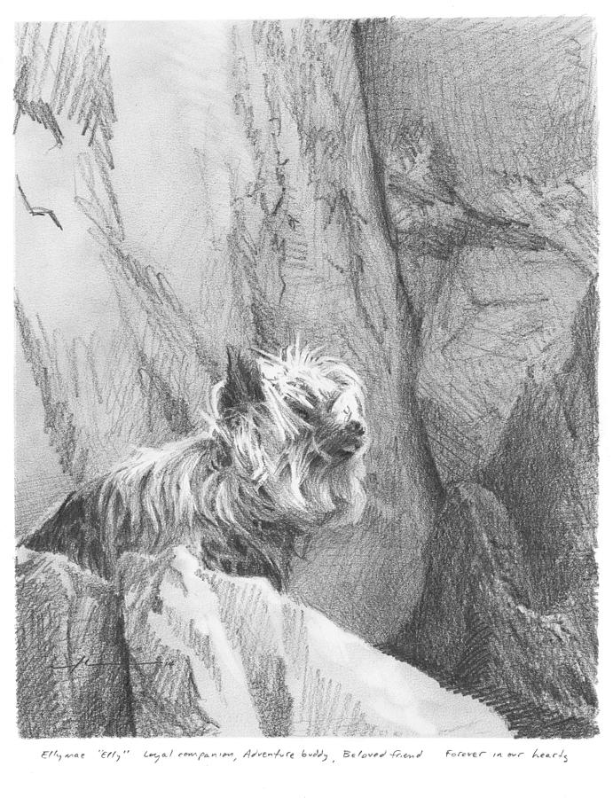Yorkie Dog On A Cliff Pencil Portrait Drawing by Mike Theuer