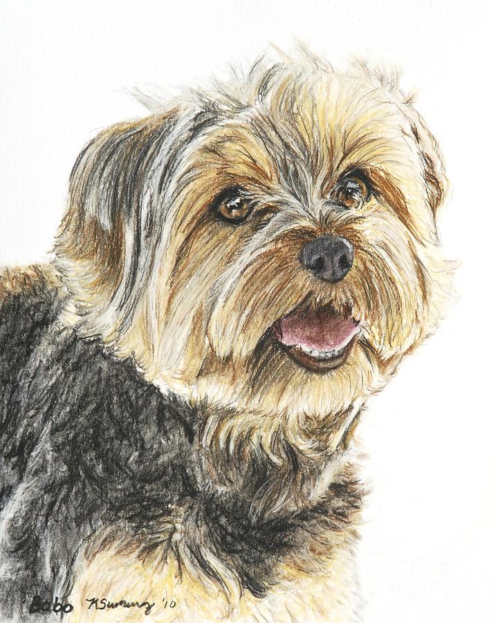 Yorkshire Terrier Pastel - Yorkie In Color by Kate Sumners