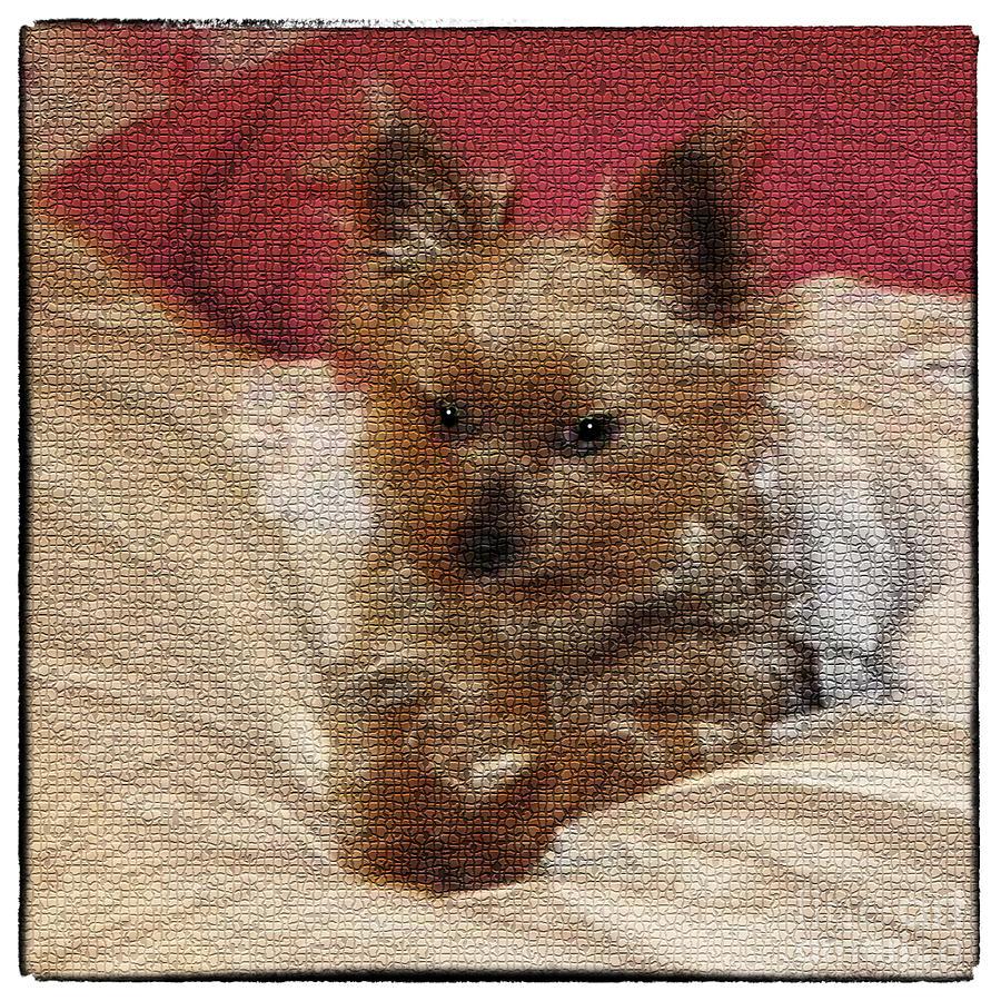 Dog Photograph - Yorkiehood by Betty LaRue