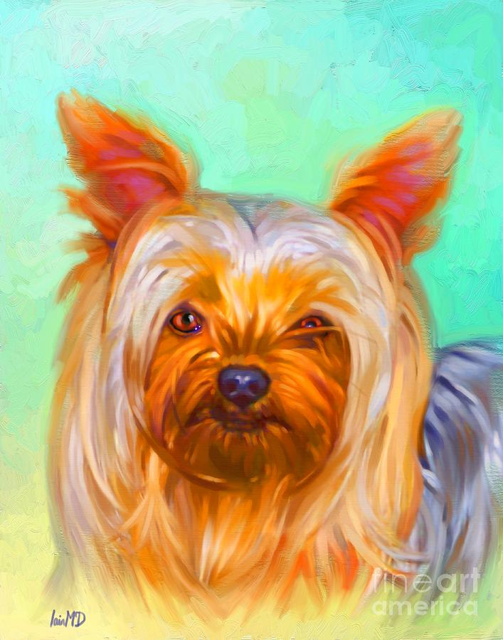 Dog Painting - Yorkshire Terrier Painting by Iain McDonald