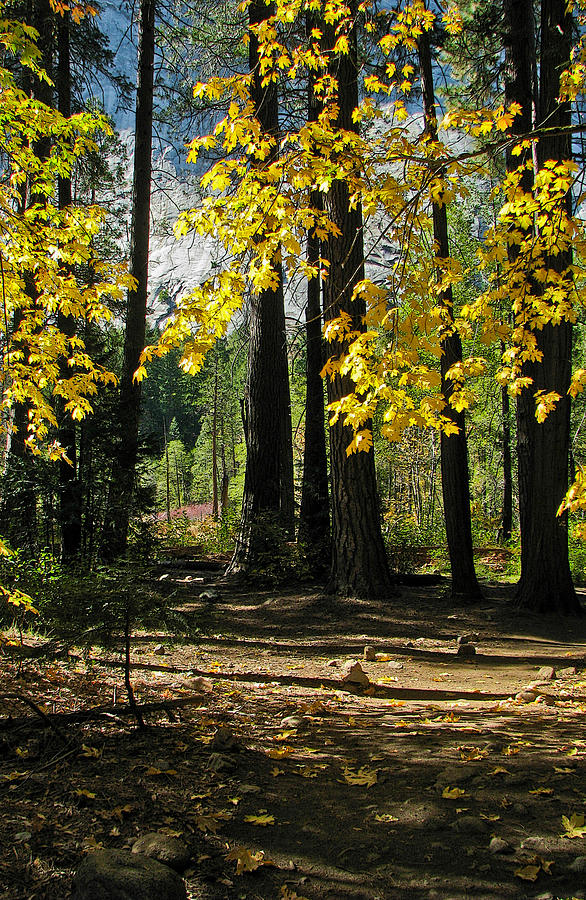 Fen Photograph - Yosemite Fen Way by John Haldane