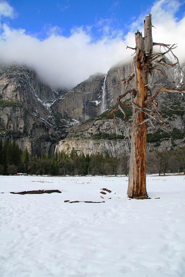Yosemite Photograph - Yosemite In The Dead Of Winter by Patricia Sanders