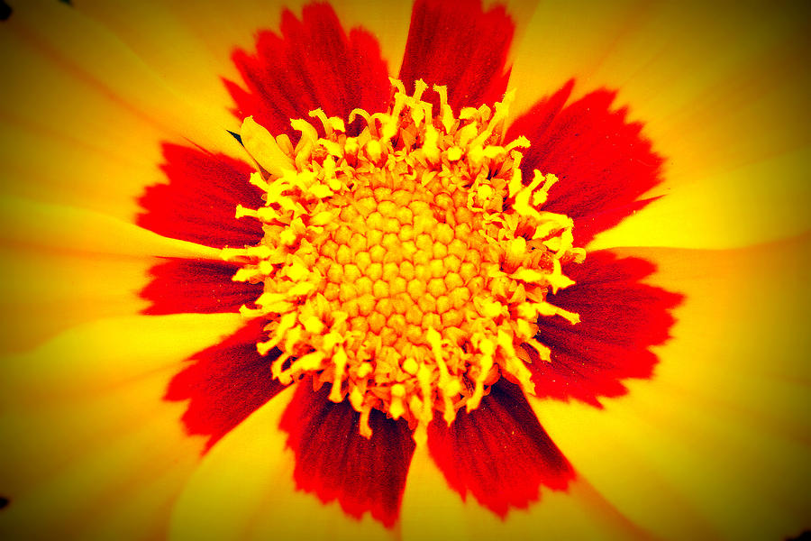 Flowers Photograph - You Are My Sunshine by Angela Bruno