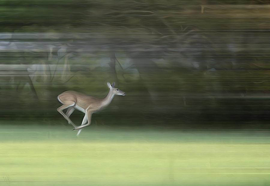 Deer Photograph - You Better Run Through The Jungle by Hazel Billingsley