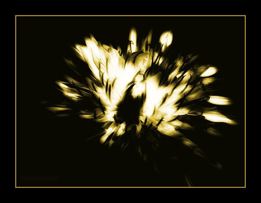 Shine Photograph - You Shine II by Mimulux patricia No