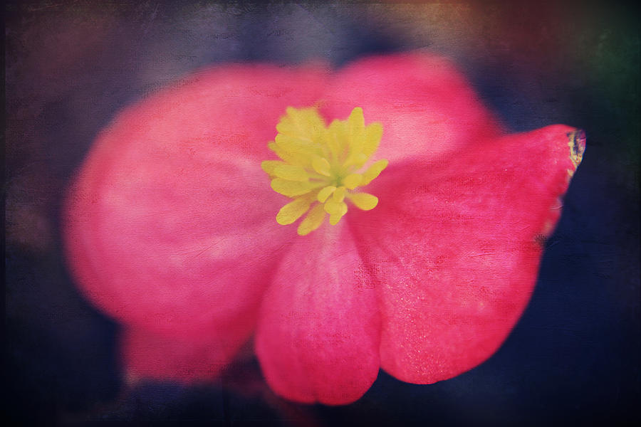 Flowers Photograph - You Touch My Soul by Laurie Search