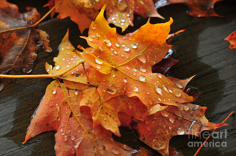 New England Photograph - You Waited For Me To Fall by Catherine Reusch Daley