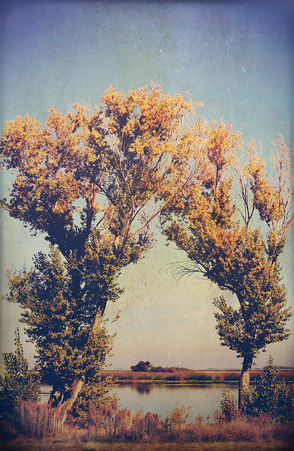 Trees Photograph - You Were Meant For Me by Laurie Search