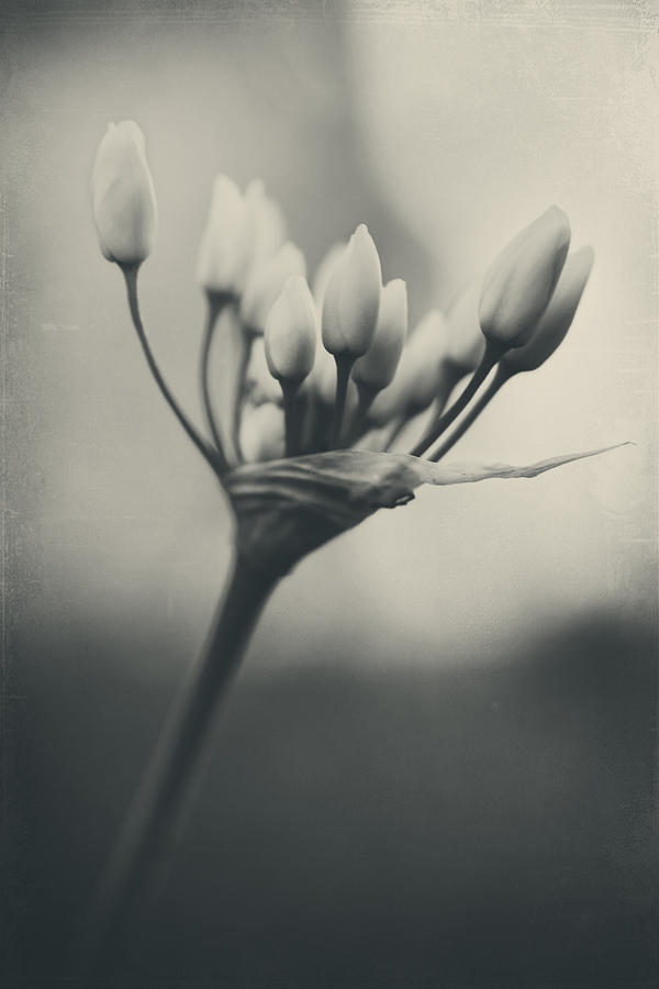Flowers Photograph - You Will Always Be by Laurie Search