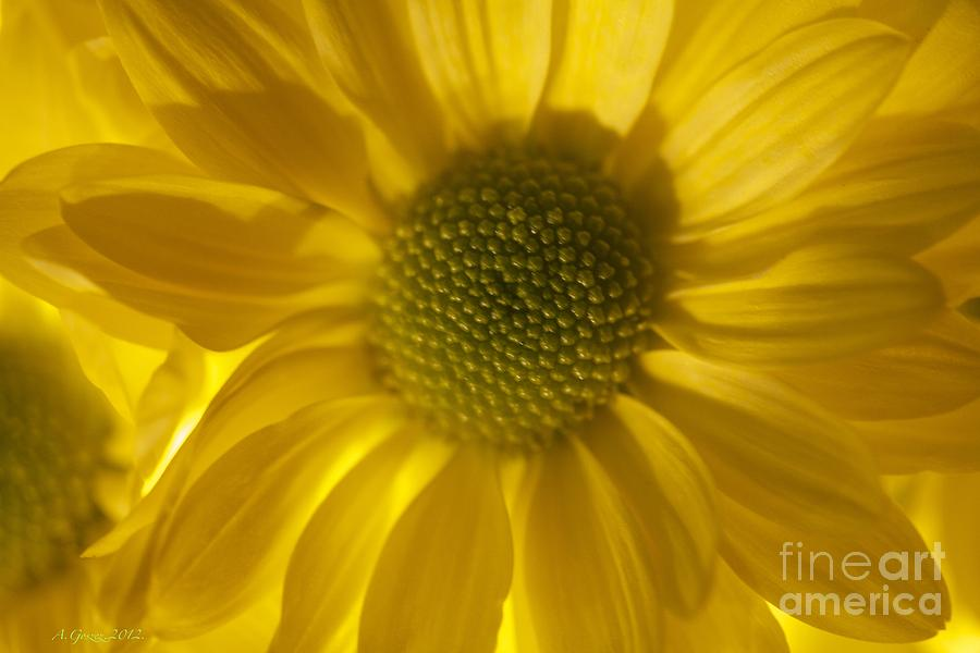 Greeting Cards Photograph - Youll Always Be Inside Of Me Like A Flower You Grow by  Andrzej Goszcz