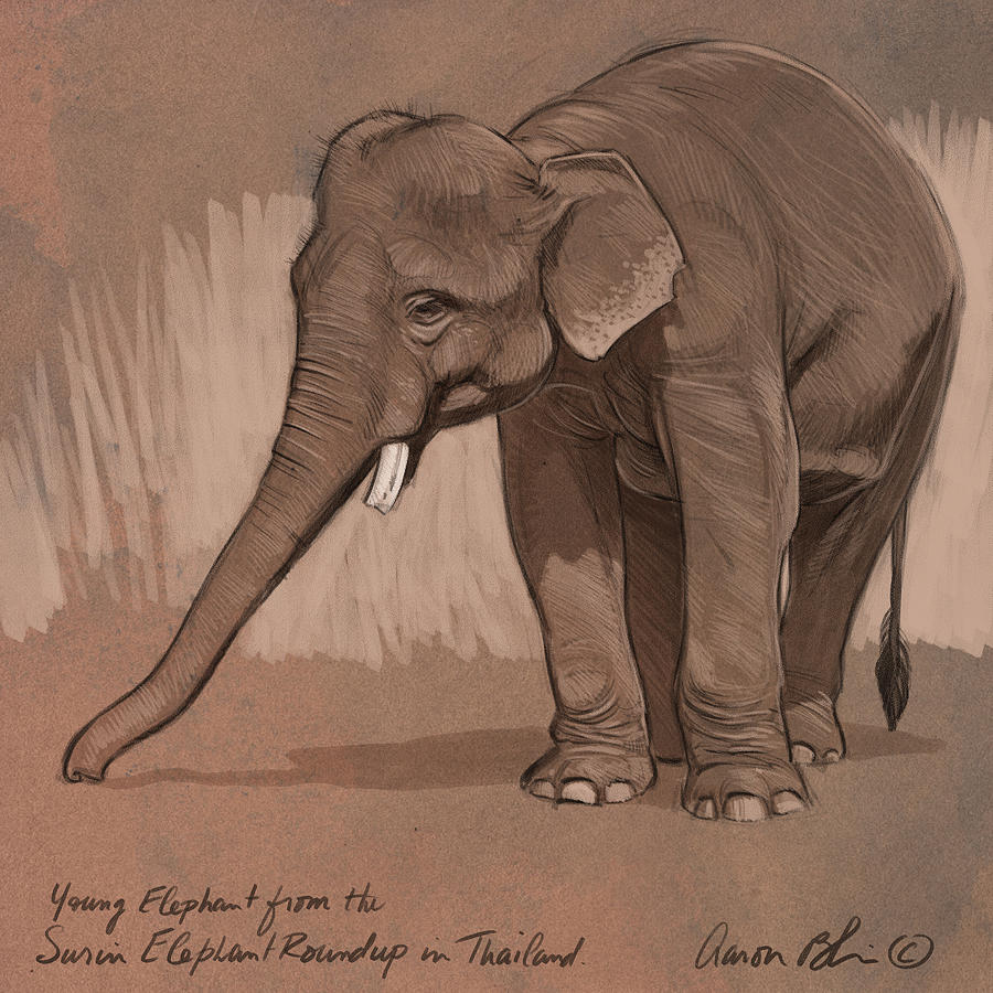 Elephant Digital Art - Young Asian Elephant sketch by Aaron Blaise