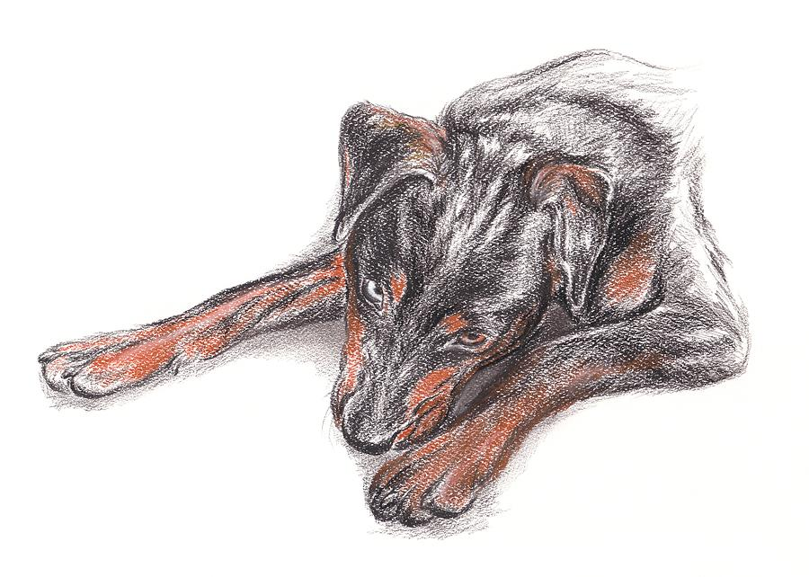 Dog Drawing - Young Black Dog Portrait by MM Anderson