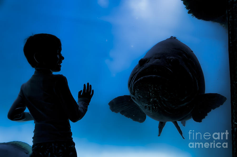 Young Boy And Goliath Grouper Photograph