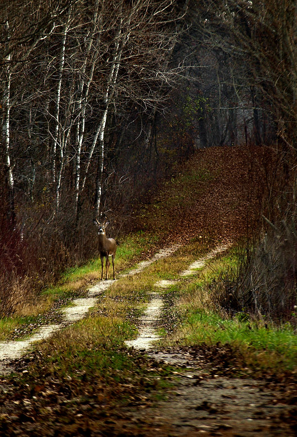 Whitetail Deer Photograph - Young Buck And Autumn by Thomas Young