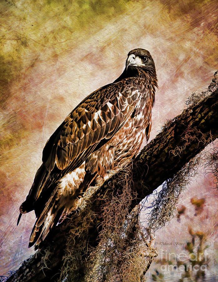 Eagle Photograph - Young Eagle Pose II by Deborah Benoit