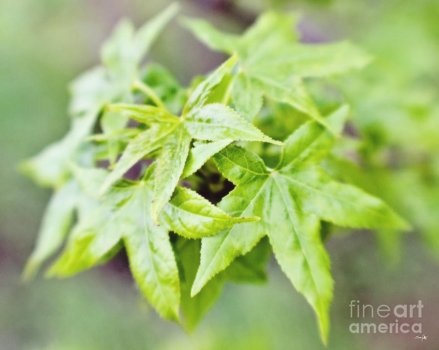 Lensbaby Photograph - Young Leaves by Scott Pellegrin