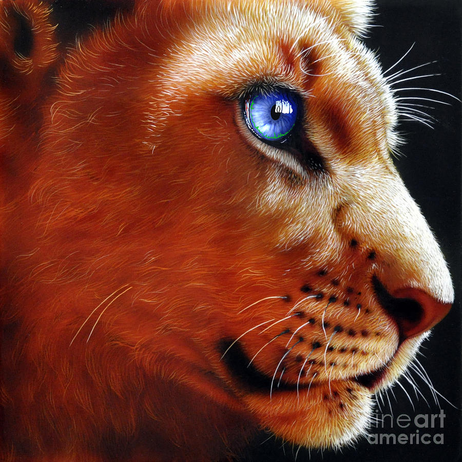 Lion Cub Painting - Young Lion by Jurek Zamoyski
