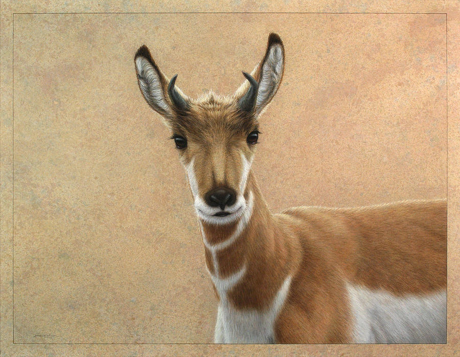 Cute Painting - Young Pronghorn by James W Johnson