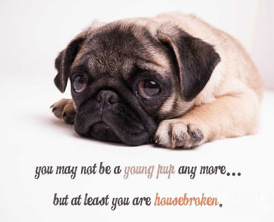 Mature Photograph - Young Pup by Edward Fielding