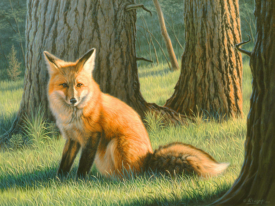 Wildlife Painting - Young Red by Paul Krapf