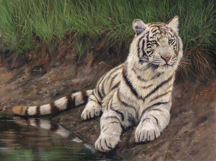 Young White Tiger Painting by David Stribbling