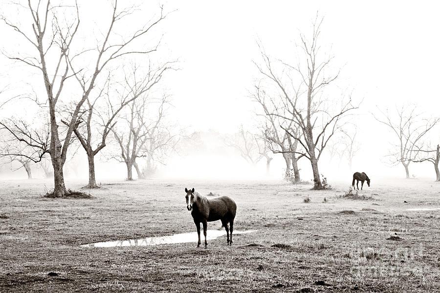 Horse Photograph - Your Morning Joe by Scott Pellegrin