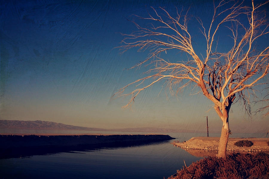 Salton Sea Photograph - Your One And Only by Laurie Search