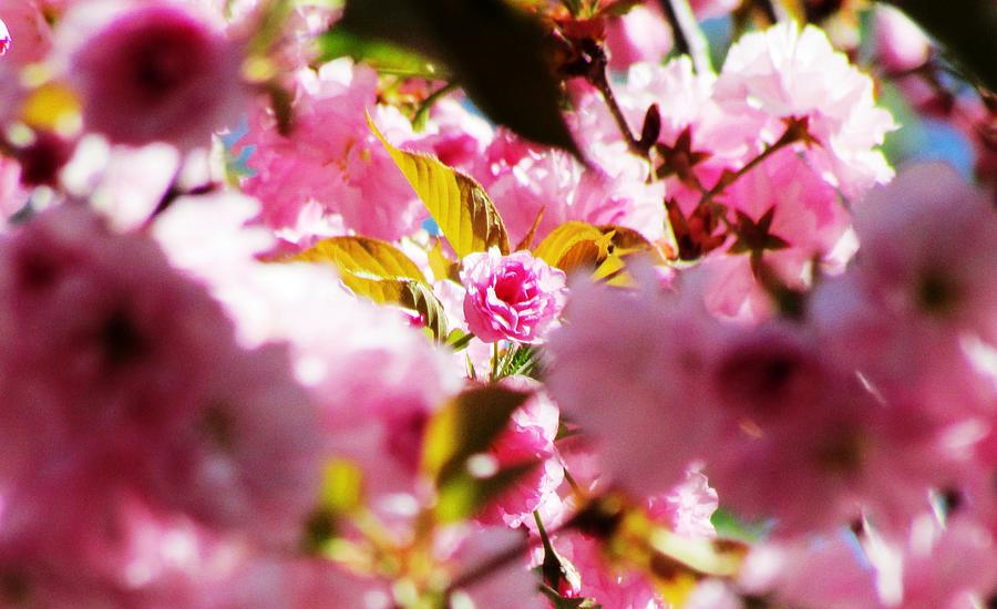 Flowers Photograph - Your The One by Will Boutin Photos