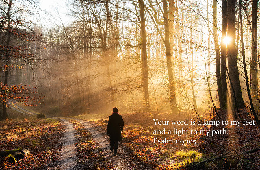 Psalm Photograph   Your Word Is A Light To My Path Bible Verse Quote By  Matthias