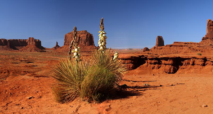 Yucca In Monument Valley Photograph by © Jan Zwilling