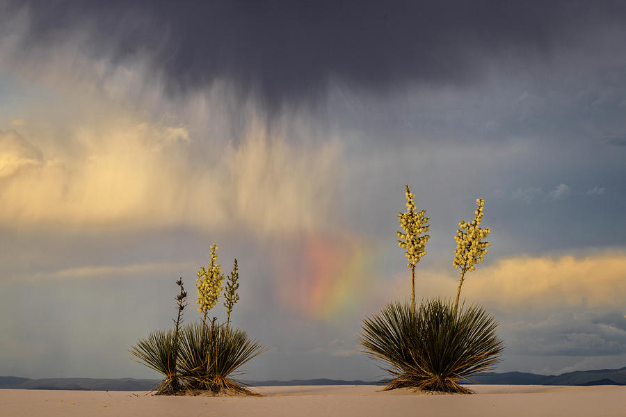 Yuccas, Rainbow And Virga Photograph by Don Smith