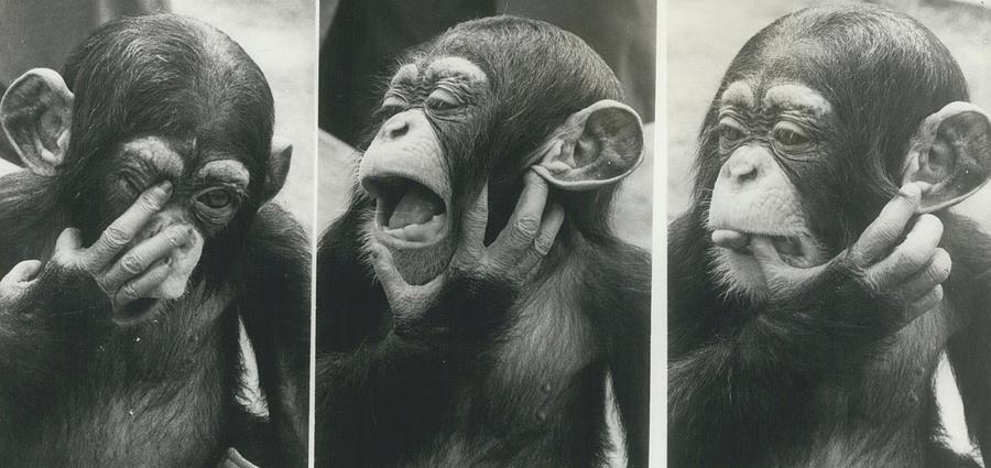 how to speak chimpanzee book