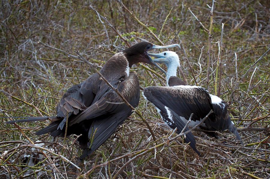 Galapagos Islands Photograph - Yum by David Beebe