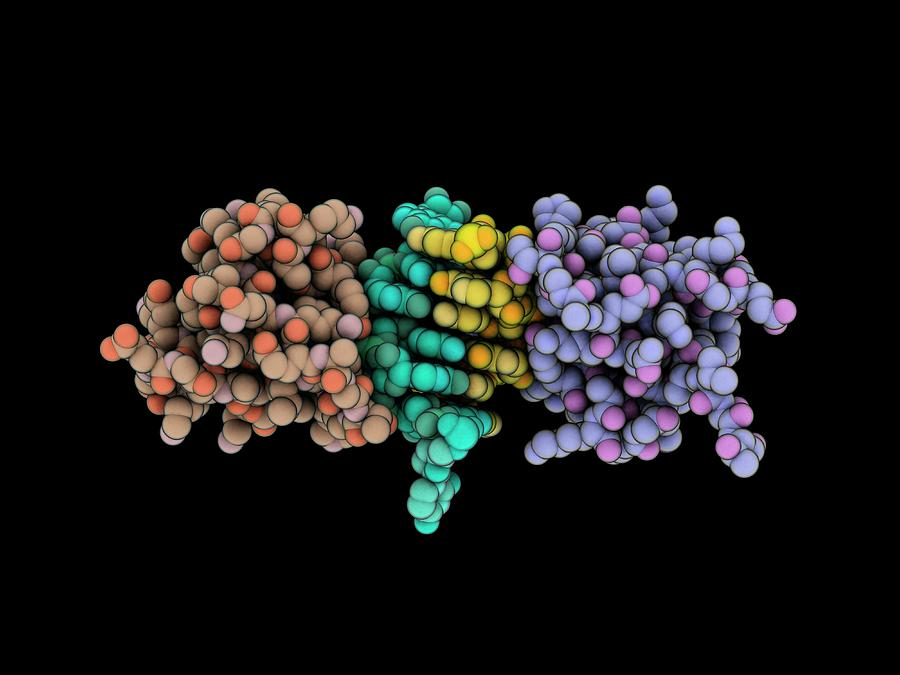 Adar1 Photograph - Z-rna Editing Enzyme Complex by Laguna Design/science Photo Library
