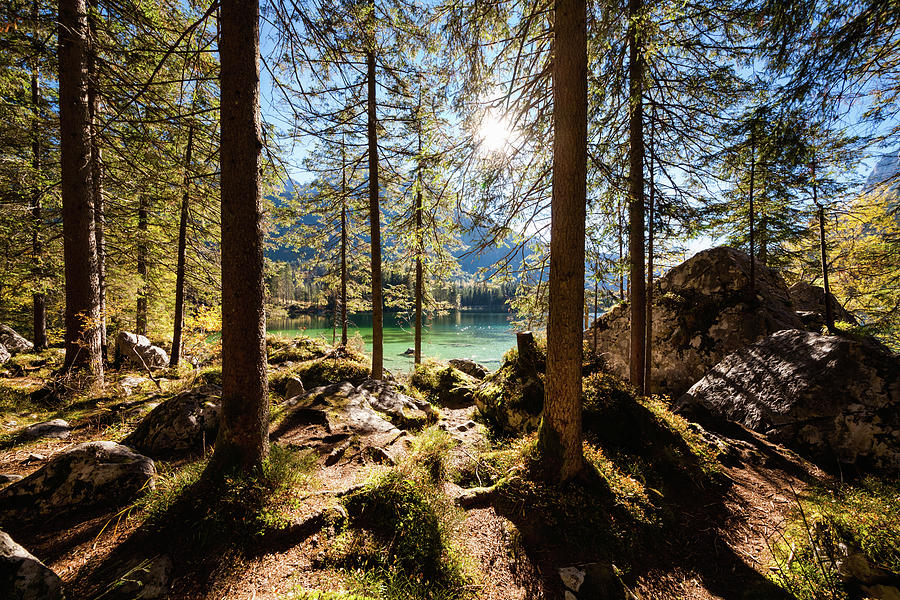 Zauberwald In Autumn Photograph by Jorg Greuel
