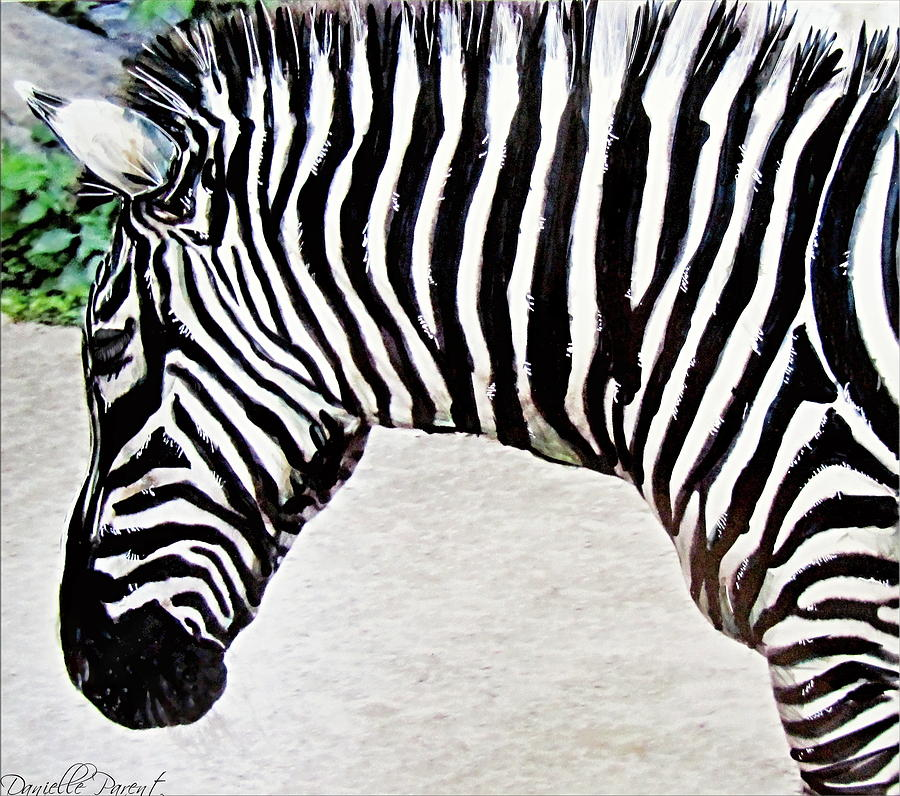 Zebra Alcohol Inks  by Danielle  Parent