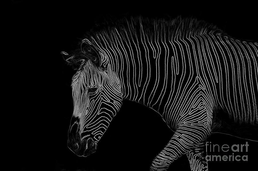 Zebra Digital Art - Zebra Art by Bianca Nadeau