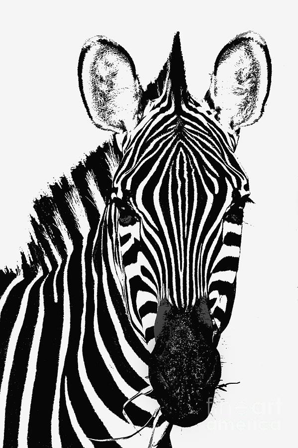 Zebra by Bobbie Turner