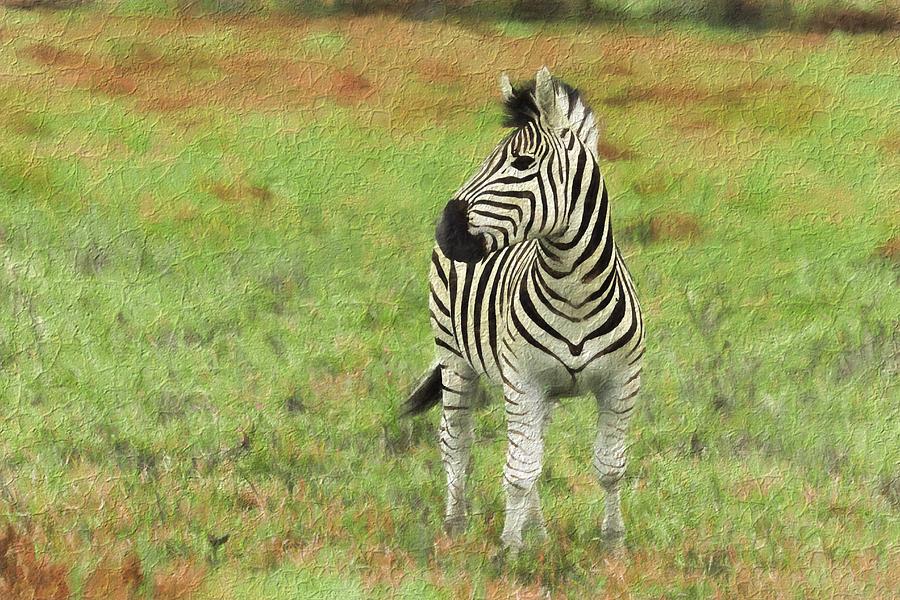 Field Photograph - Zebra by David Gleeson