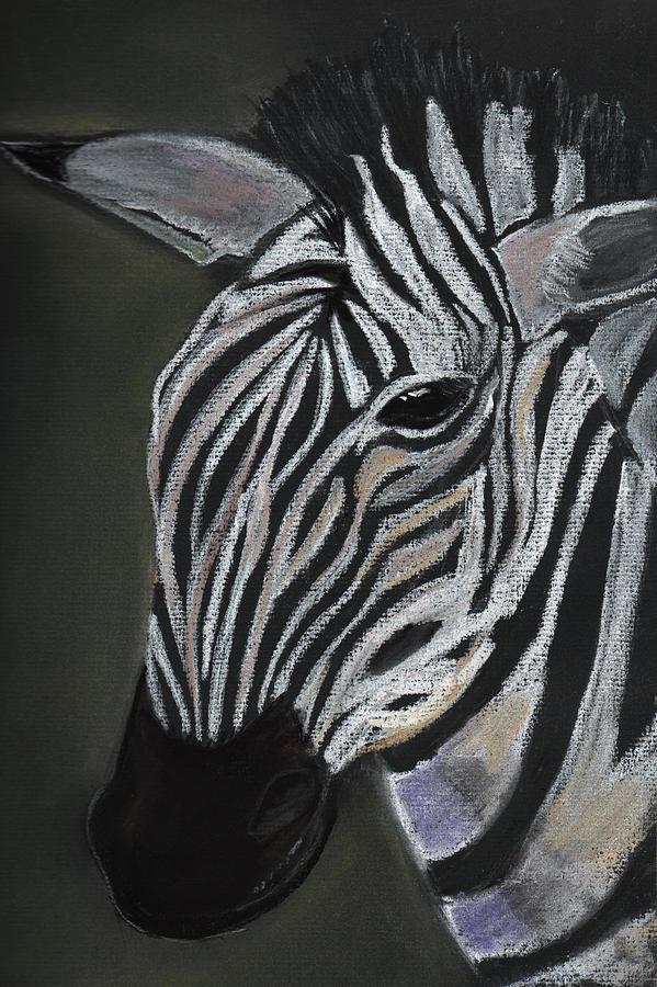 Zebra Painting - Zebra by Dorothy Riley