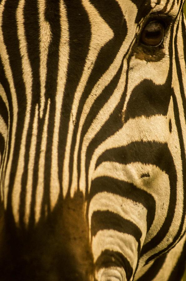 Landscape Photograph - Zebra Eye by Jennifer Burley