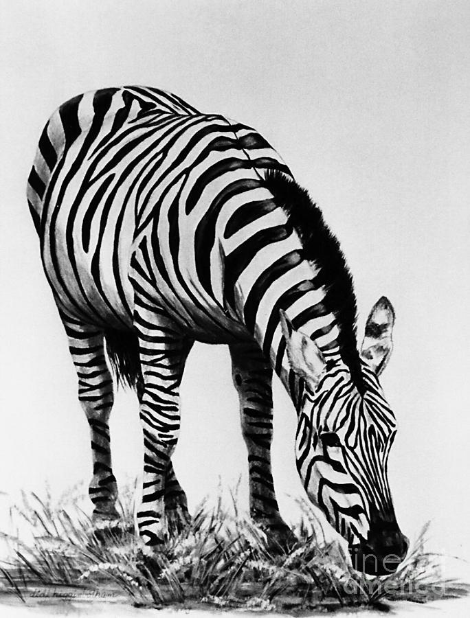 Black And White Painting - Zebra  grazing by DiDi Higginbotham