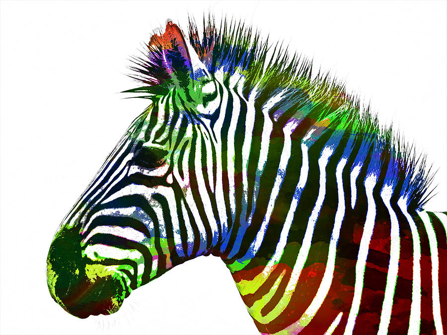 Zebra In Watercolor Paint Painting By Celestial Images