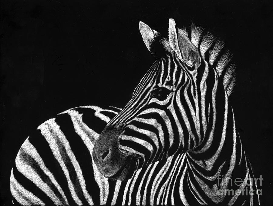 Zebra Drawing - Zebra No. 3 by Sheryl Unwin