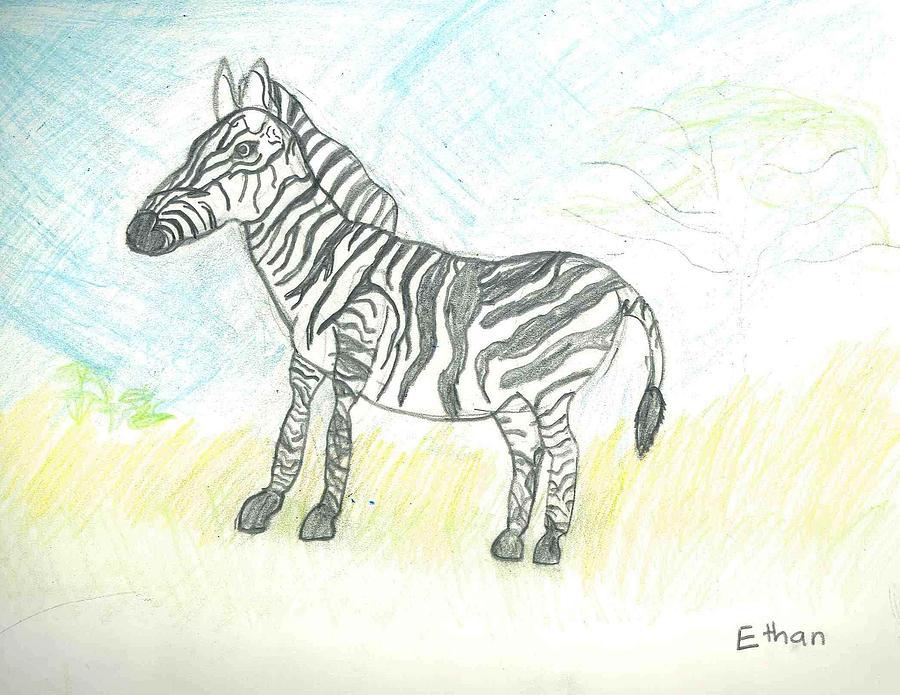 Zebra Drawing - Zebra On The African Plains by Ethan Chaupiz